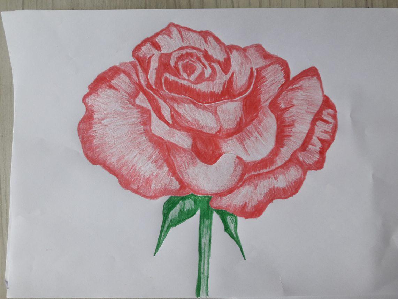 Como Desenhar Uma Rosa De Um Jeito Bem Facil E Descomplicado